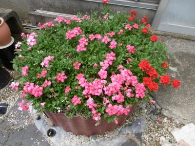花てまり2
